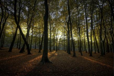 800px-Hopwas_Woods_Sun